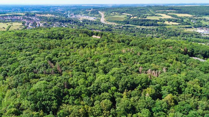 Der Wald in Kleinblittersdorf im Jahr 2020.