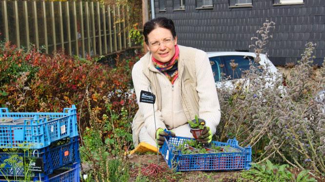Rebekka Nadig, die Vorsitzende des Vereins für Dorfentwicklung Kleinblittersdorf, topft die kleinen Natternköpfe ein.