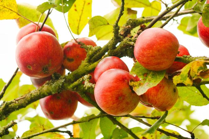 Symbolfoto - Äpfel.