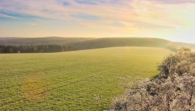 Auf diesem Grundstück oberhalb des Hartungshofes in Bliesransbach soll der Bürger-Solarpark entstehen.