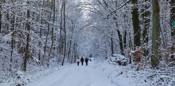 Winterwetter vom feinsten lockte die Menschen auf die Feld- und Waldwege.