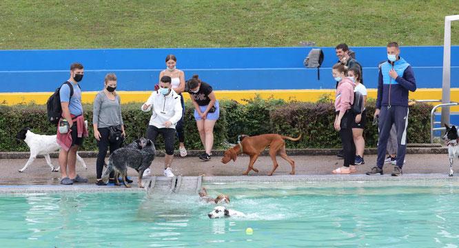 Mehr als 200 Menschen und mehr als 100 Hunde kamen zum Saisonabschluss.
