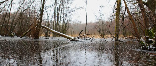 Das Wasser im Feuchtbiotop im Kleinblittersdorfer Wald soll den Aluminium-Grenzwert um das Dreifache überschreiten.