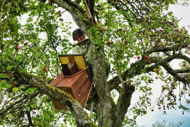 Bliesgau-Ranger Michael Kessler mit einem Nistkasten im Baum.