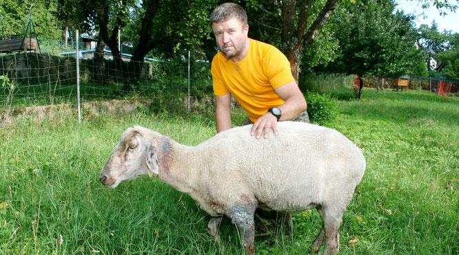 Dieses Schaf von Peter Pfeiffer hat im vergangenen Jahr den Angriff eines Hundes nicht überlebt.