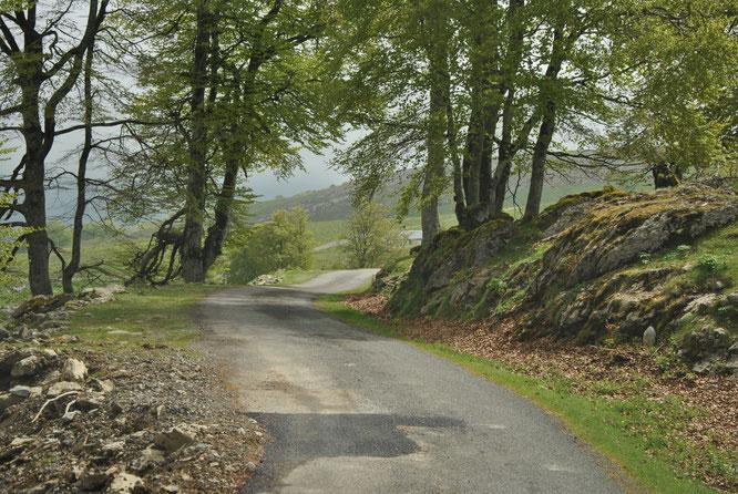 Ce chemin que mes ancêtres bergers ont dû parcourir tant de fois.
