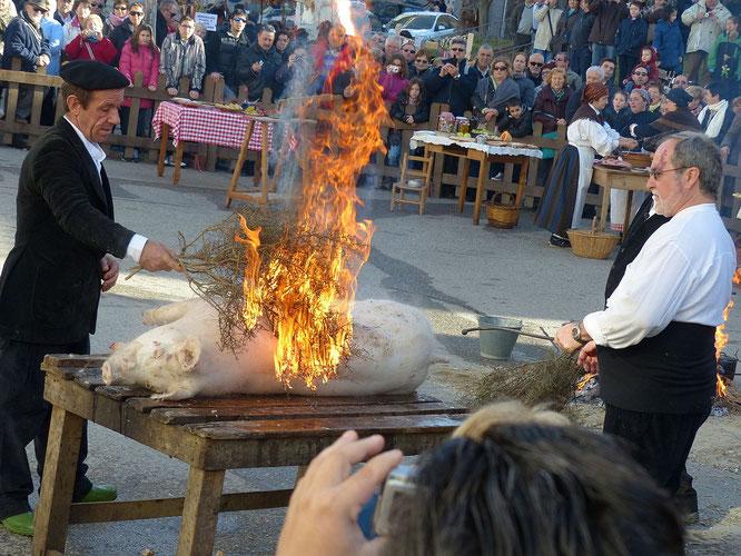 Festa del Tossino Albelda.