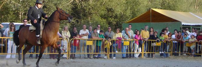 Feria Caballar San Miguel Graus