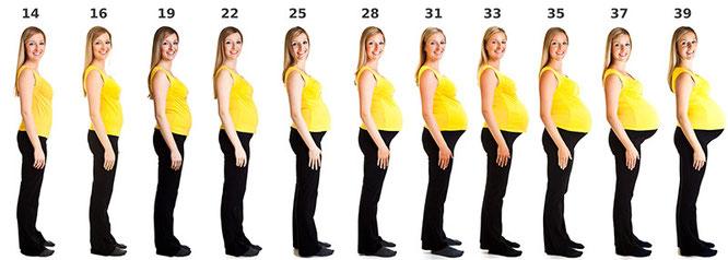 Wie viele Schwangerschaftswochen gibt es?