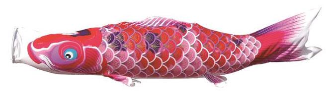 鯉のぼり 女の子用ピンク鯉「ちりめん京錦」