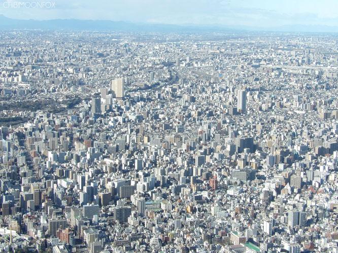Von der Tembo-Galerie aus gesehen wirken die Hochhäuser Tokyos nur wie winzige Bauten. Blick in Richtung Ibaraki (links) und Chiba (rechts).