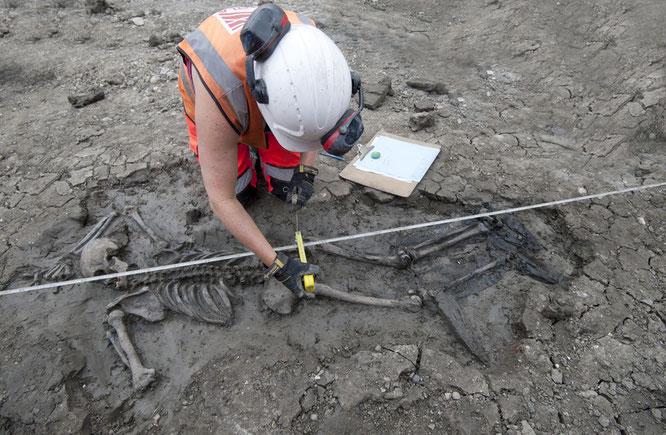 La découverte de ce squelette à Bermondsey a suscité un enthousiasme particulier chez les archéologues. Crédit : MOLA