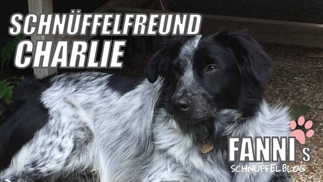 charlie schnüffelfreund fanni hund