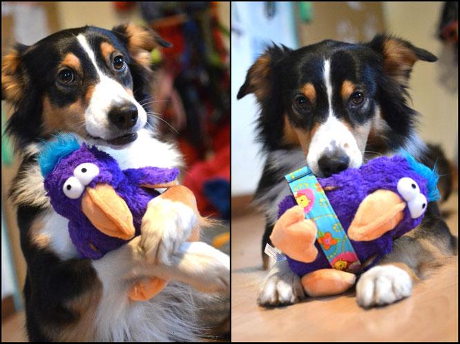 Amy's neuer Freund Dodo und ihr neues Halsband ♡