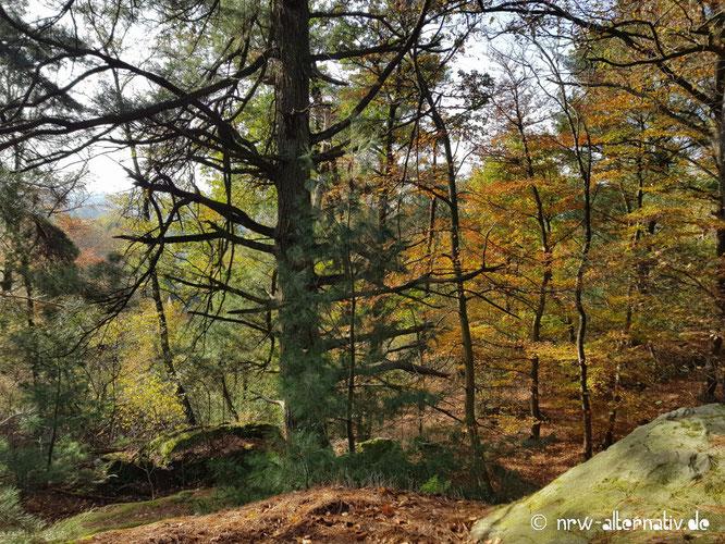 Blick in einen bunten Mischwald mit Felsen.