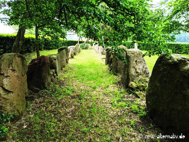 Alte Steine in einer Reihe, von Bäumen überwachsen.