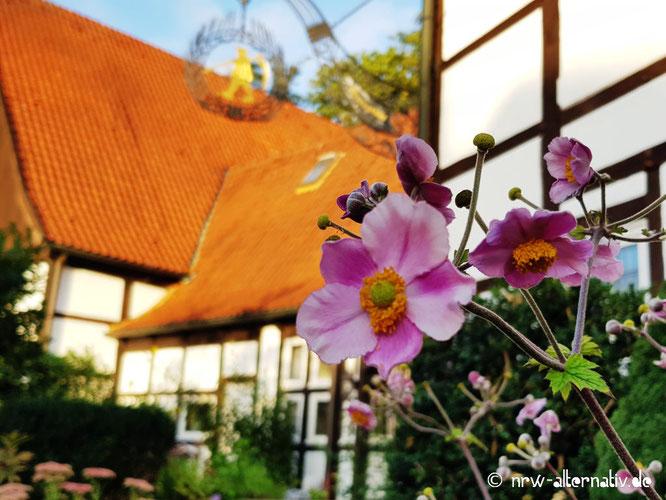 Der Schnitterhof mit einer Blume davor.