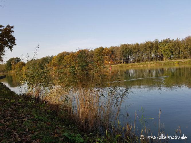 Hier sieht man flaches Wasser mit Baumbewuchs im Hintergrund - vermutlich ein Kanal.
