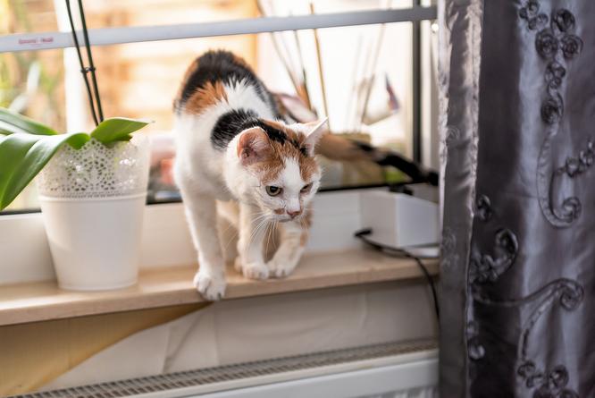 Katze Emma wird munter und verlässt die Fensterbank © Friedhelm Herr/FRANKFURT DOKU