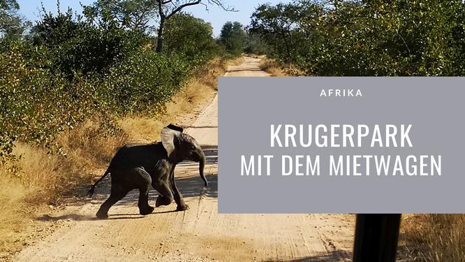 Krugerpark, Krugerpark, Safari, Krugerpark mit Mietwagen, kleiner Elefant läuft über Strasse