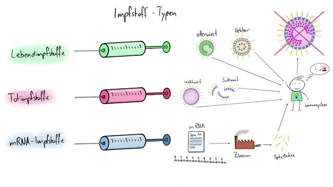 Visualisierung der verschiedenen Impfstofftypen: Lebnendimofstoffe, Totimpfstoffe und mRNA-Impfstoffe