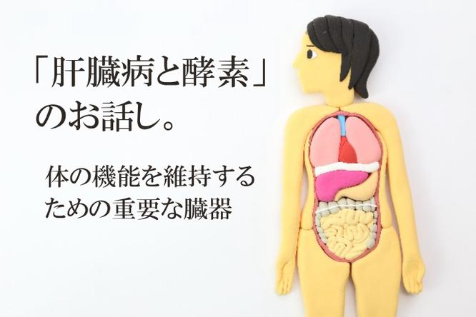 肝臓病と酵素のお話し。