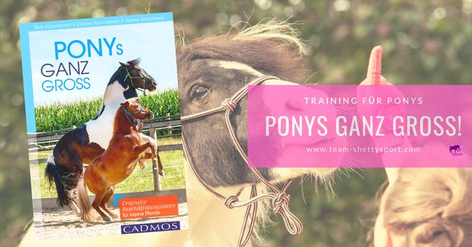 Ponys ganz groß: Originelle Beschäftigungsideen für kleine Pferde. Damit Du Dein Shetty abwechslungsreich und gesunderhaltend trainieren kannst.