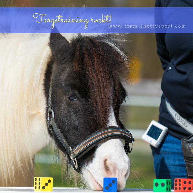 Nasentarget Targettraining Clickertraining Pferd Farbunterscheidung Shetty