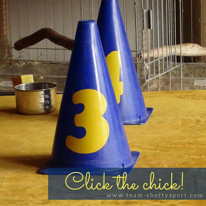 Clickertraining, Hühner Modul, positive Verstärkung