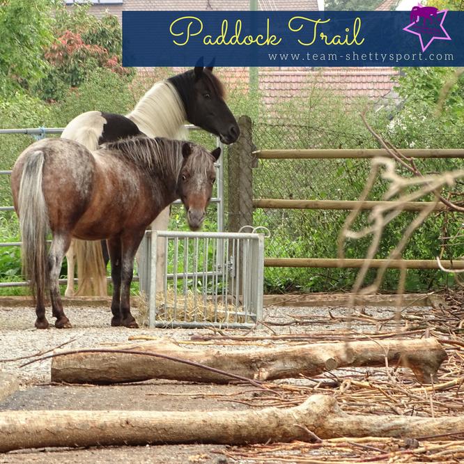 Paddock Trail artgerechte Pferdehaltung Totholzhecke