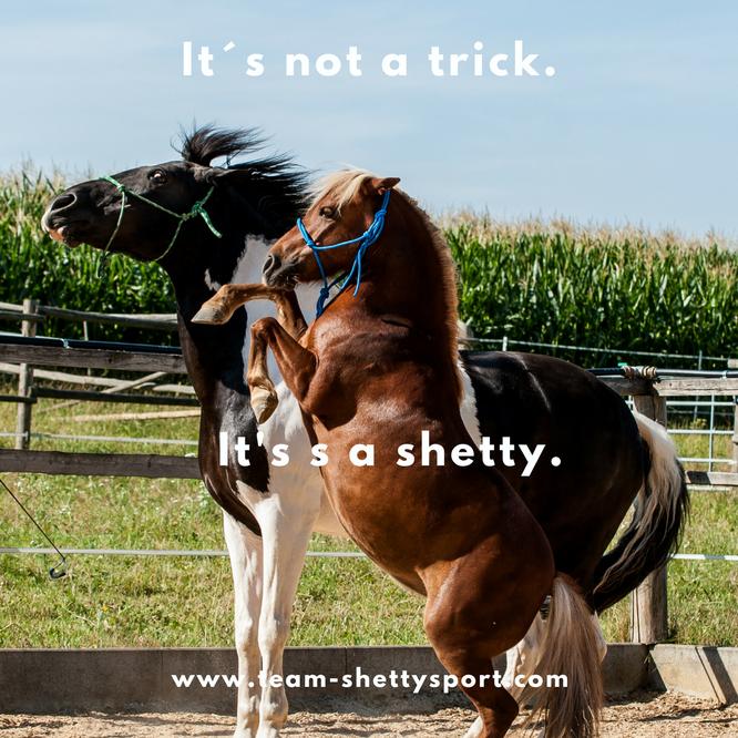 Klein aber oho, Ponys ganz groß, Shetty als Beisteller