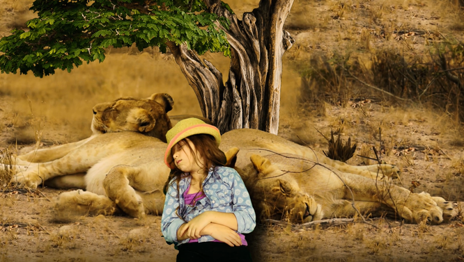 Lions sleeping, lion, The Wild Adventure Girls, Adventure