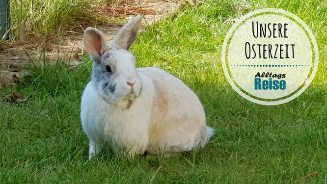 Unser Kaninchen Max