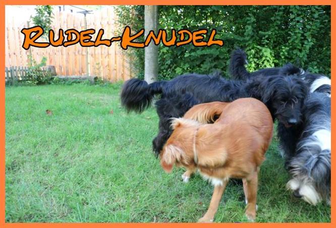 "… aber immer mittendrin im ""Rudel-Knudel"":"