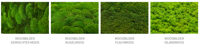 Quelle: Moos-Design.de - Moosbilder Beispiele