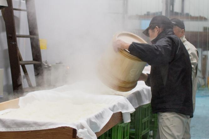 行き先は麹室の前。最初に掘り出したのは麹米にするための蒸米だった! 台の上でしばらくさらして冷ます。