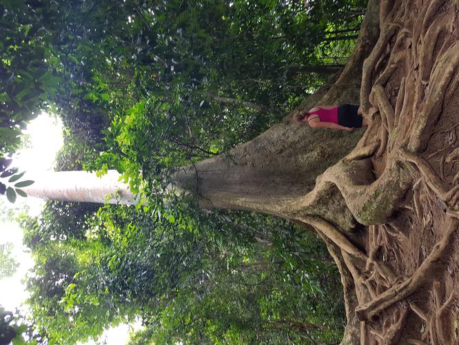 Sabbatical-Thailand