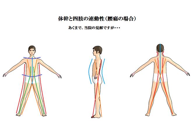 体幹と四肢の連動性