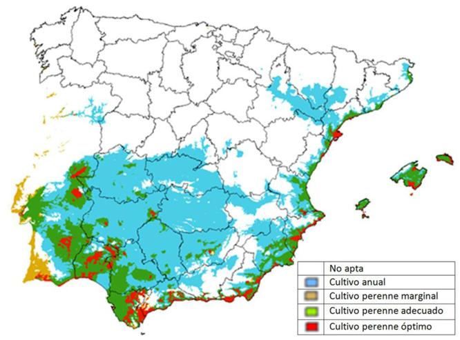 Zonas de España en las que se puede cultivar la Moringa Oleifera
