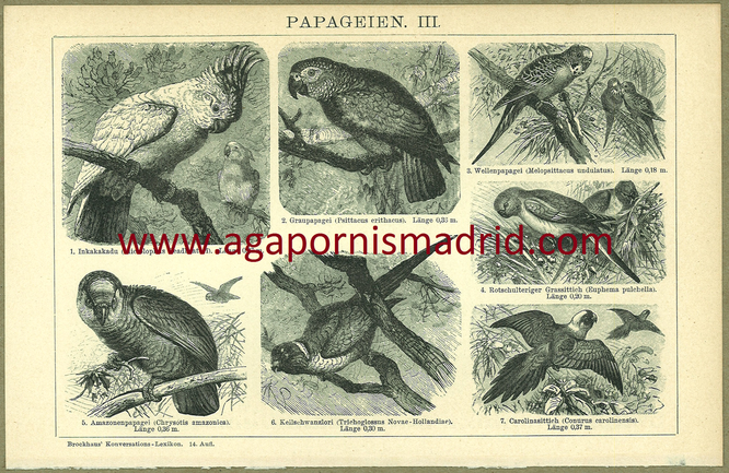1894 - Papageien III
