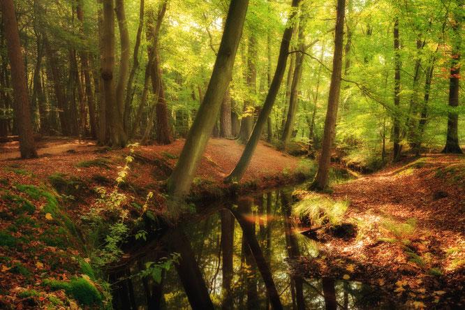 Leuvenumse bos, hierdense beek