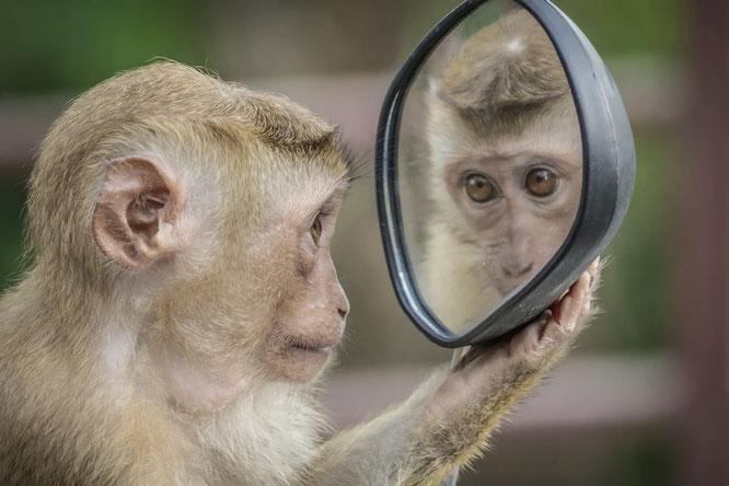Was verraten Trigger uns über uns selbst?