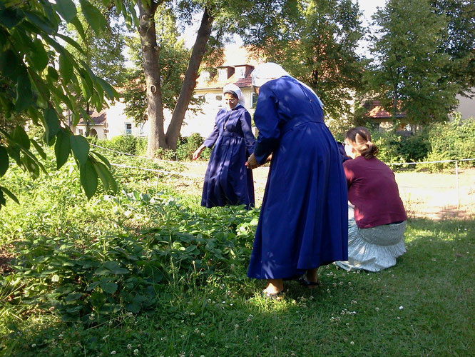 Erdbeerernte im Frauengarten am Rothenberg beim Marienkrankenhaus