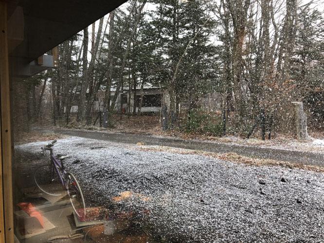 一度ほぼ雪の消えた地面がみるみる白くなる!と写真を撮ったが、そのあと晴れてまた土に戻る。