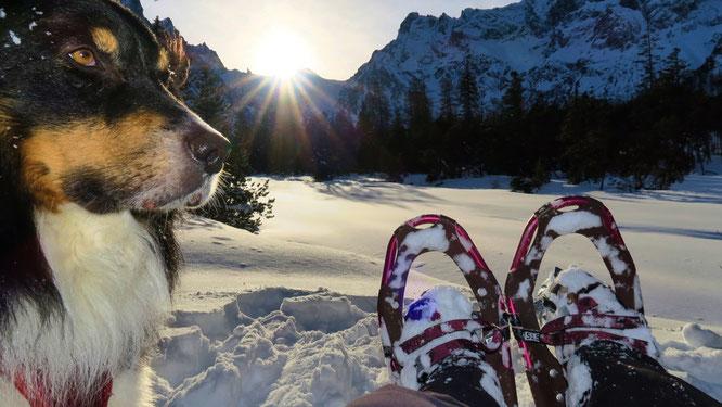 Wandern mit Hund im Wimbachgries I Winter
