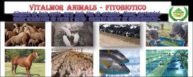 Moringa aplicada como alimento animal.