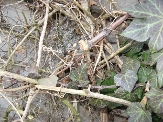 Foto 4 - Ein Nest aus dem Jahr 2009, der Standort war in der Nähe. Das Einflugloch wieder oben seitlich.