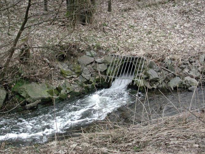 Einleitung der KA Meinerzhagen – Der Bach führt weniger Wasser als der Kläranlagenablauf beisteuert (Foto: StUA Hagen)