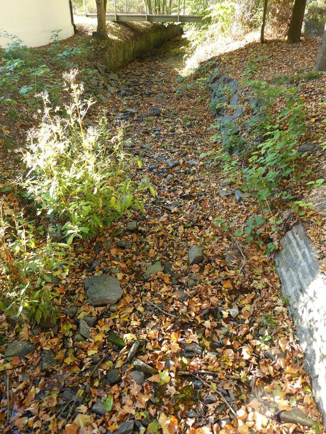 Die Volme in Hagen ist nur noch ein Rinnsal - einige Bäche sind sogar trocken, hier die Selbecke am Freilichtmuseum.