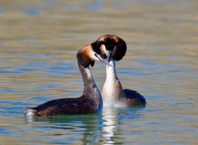 Vogelbeobachtung im Wollmatinger Ried - Foto: NABU/A. Nießen